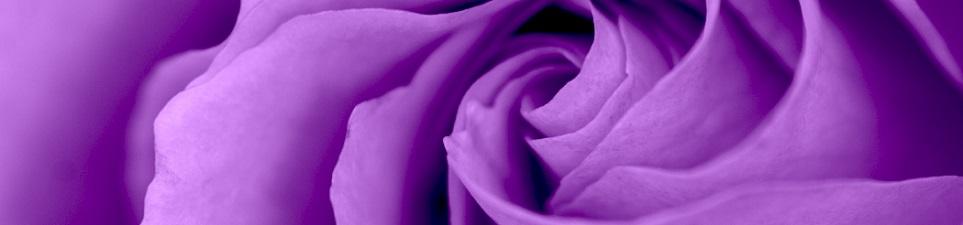 ATI-header-purple-rose963w).jpg